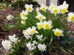 Spring comes to Blessed Trinity, as evidenced in our garden on the east side of the church.