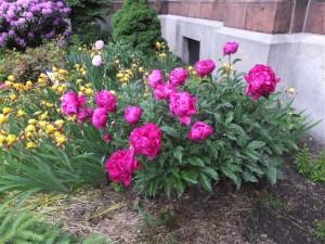 es.garden.20150605 (Small)